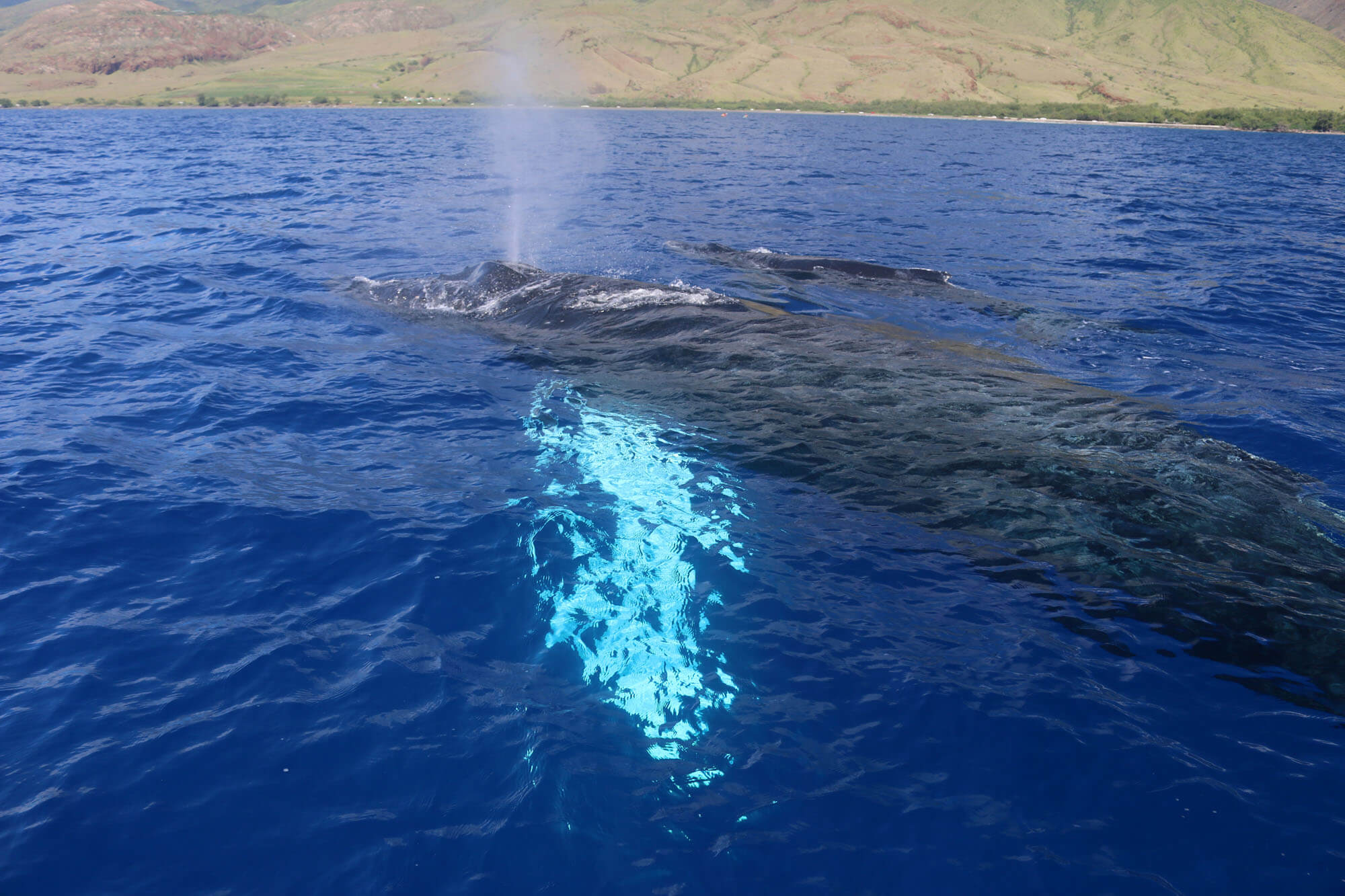 Maui Whale Watching Boat Charter Tours