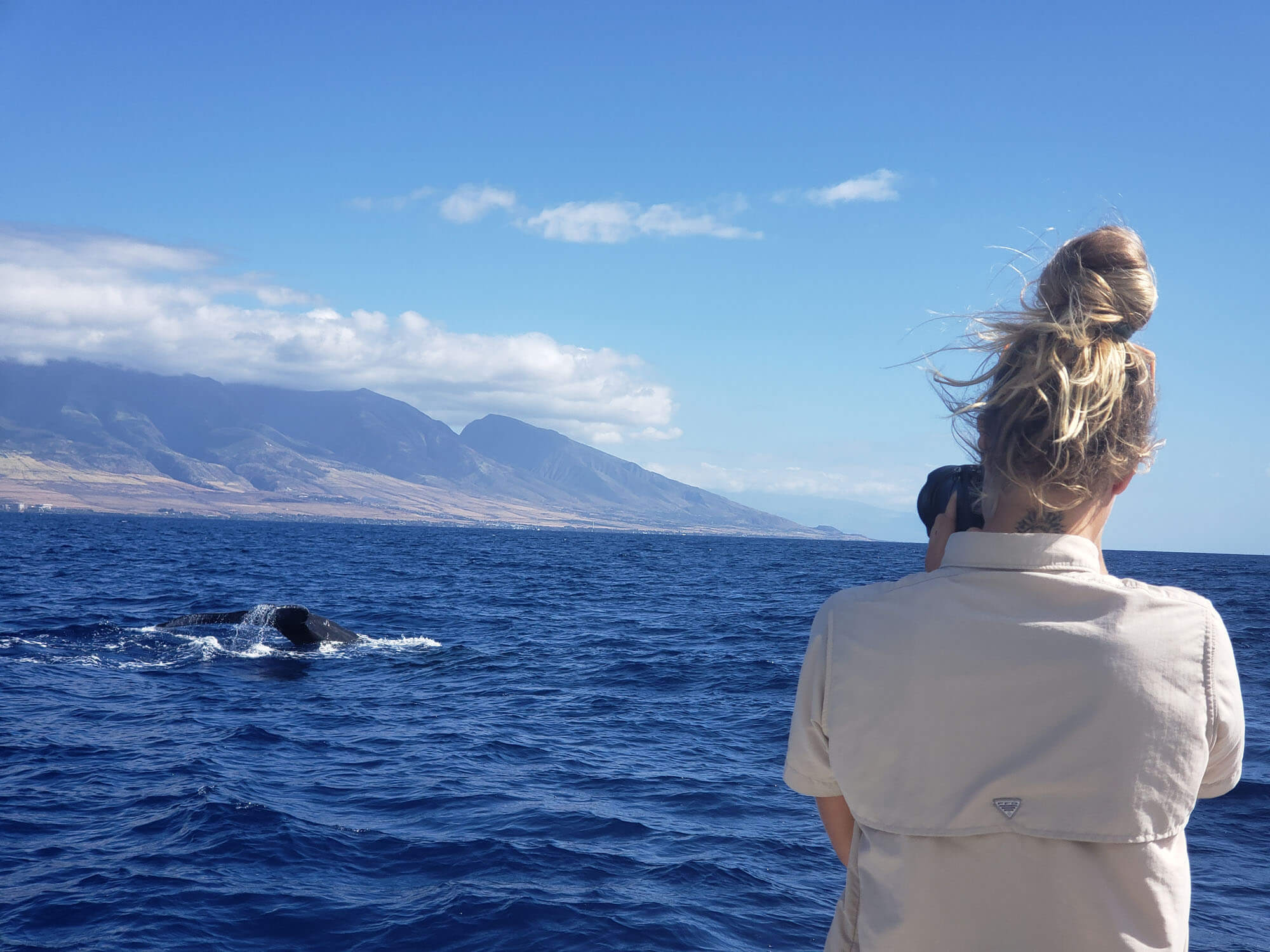 Maui Whale Watching Adventures