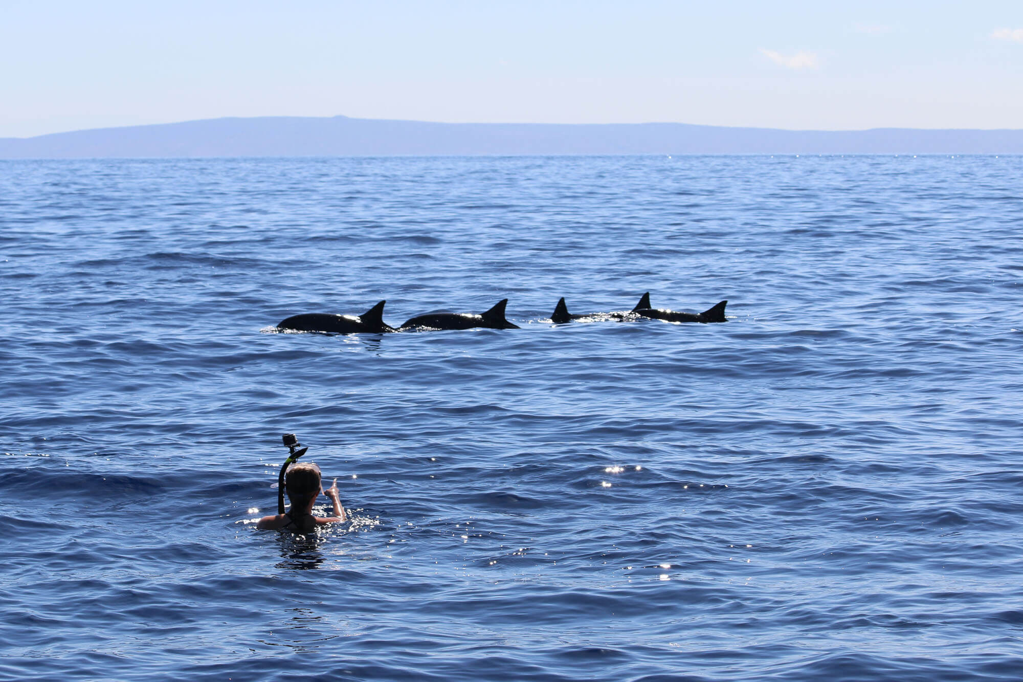 Dolphin Charter Tours in Maui