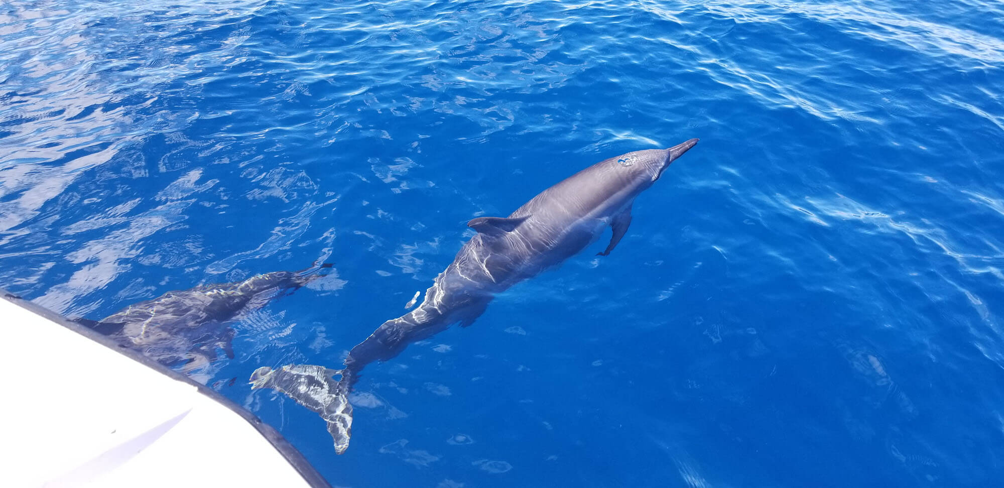Dolphin Tours in Maui