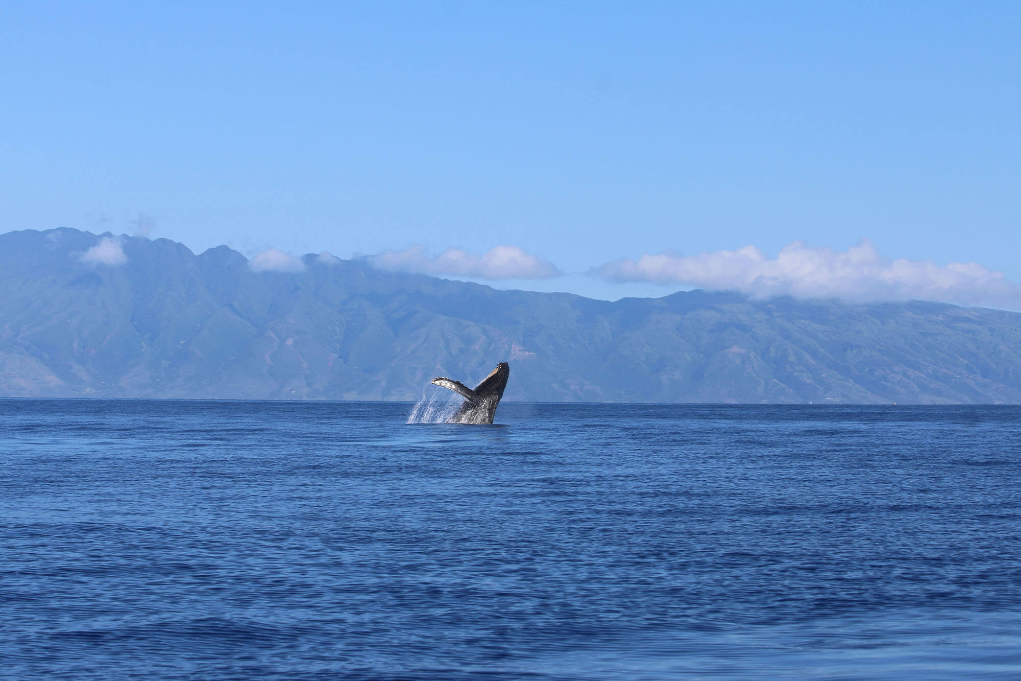 Watch the Whales in Maui
